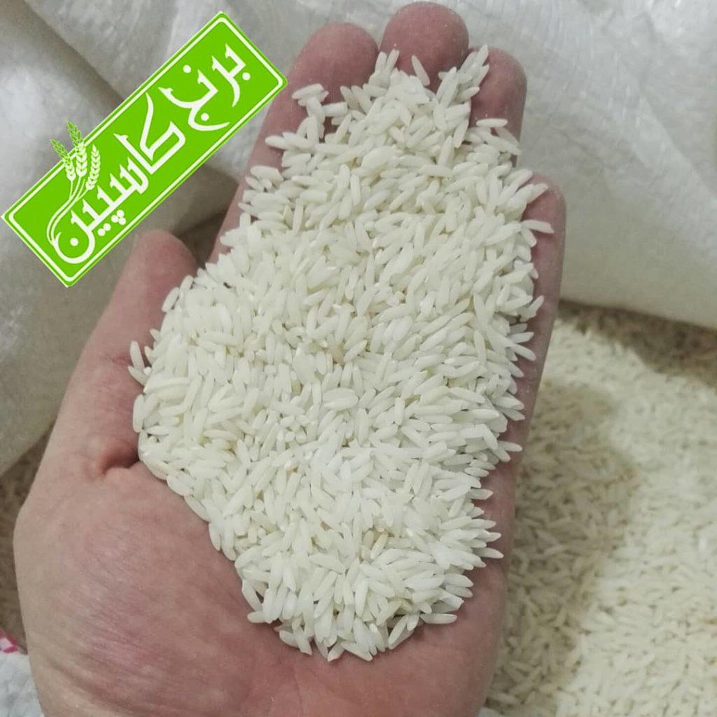 برنج طارم محلی