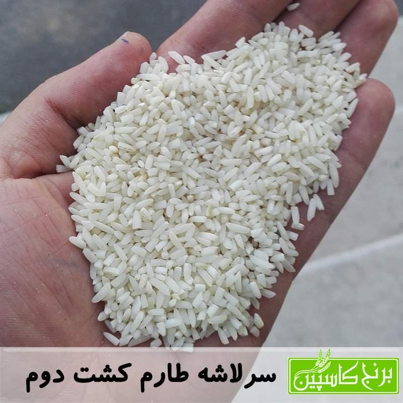 برنج لاشه کشت دوم