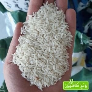 برنج کشت دوم