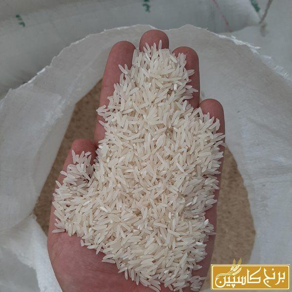 برنج فجر گرگان